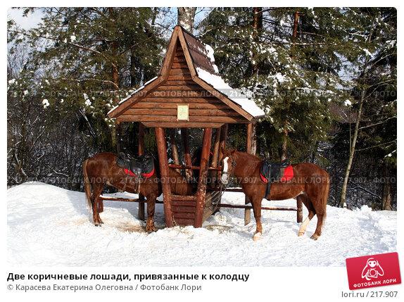 Две коричневые лошади, привязанные к колодцу, фото № 217907, снято 3 февраля 2008 г. (c) Карасева Екатерина Олеговна / Фотобанк Лори