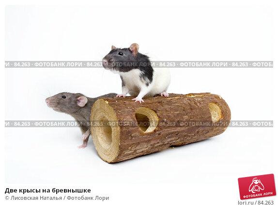 Купить «Две крысы на бревнышке», фото № 84263, снято 15 сентября 2007 г. (c) Лисовская Наталья / Фотобанк Лори