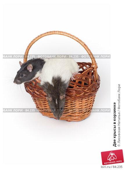Две крысы в корзинке, фото № 84235, снято 15 сентября 2007 г. (c) Лисовская Наталья / Фотобанк Лори