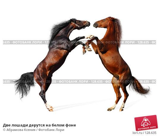 Две лошади дерутся на белом фоне, фото № 128635, снято 29 сентября 2007 г. (c) Абрамова Ксения / Фотобанк Лори
