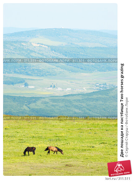 Две лошади на пастбище Two horses grazing, фото № 311511, снято 4 июня 2008 г. (c) Сергей Старуш / Фотобанк Лори