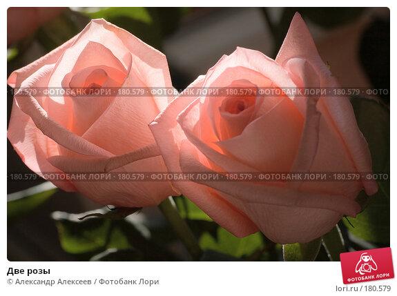 Две розы, эксклюзивное фото № 180579, снято 13 мая 2007 г. (c) Александр Алексеев / Фотобанк Лори