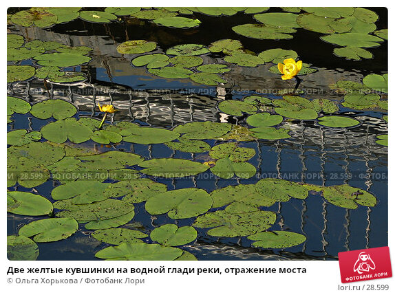 Купить «Две желтые кувшинки на водной глади реки, отражение моста», фото № 28599, снято 30 июля 2006 г. (c) Ольга Хорькова / Фотобанк Лори