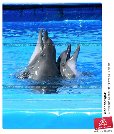"Две ""звезды"", фото № 28615, снято 3 сентября 2006 г. (c) Михаил Баевский / Фотобанк Лори"