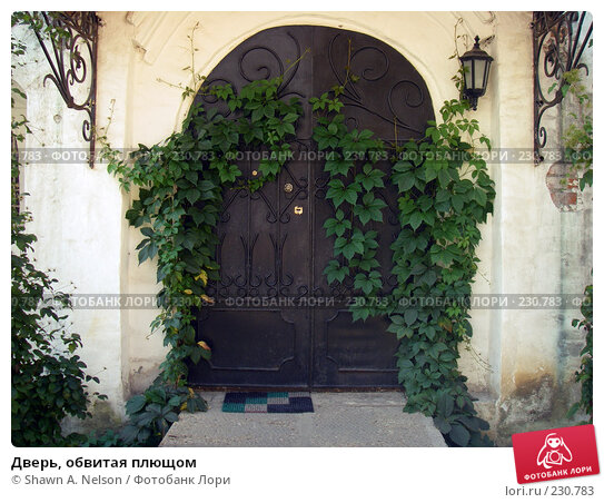 Купить «Дверь, обвитая плющом», фото № 230783, снято 15 августа 2007 г. (c) Shawn A. Nelson / Фотобанк Лори