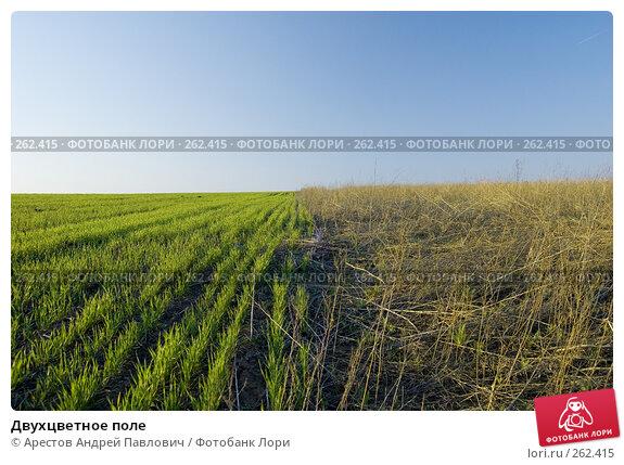Двухцветное поле, фото № 262415, снято 12 апреля 2008 г. (c) Арестов Андрей Павлович / Фотобанк Лори