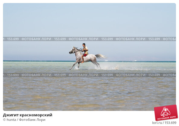 Джигит красноморский, фото № 153699, снято 16 сентября 2007 г. (c) hunta / Фотобанк Лори