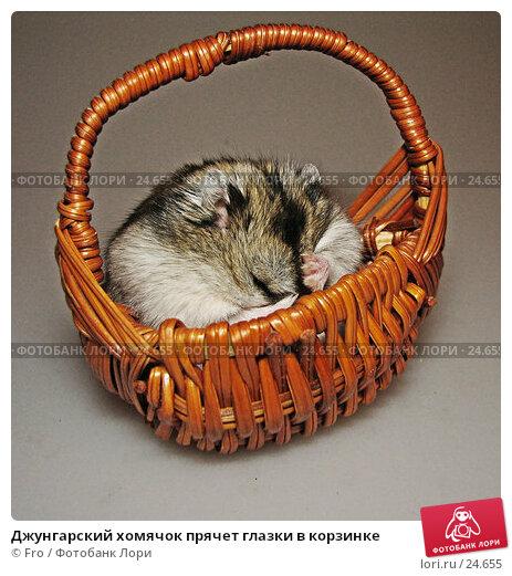 Купить «Джунгарский хомячок прячет глазки в корзинке», фото № 24655, снято 18 марта 2007 г. (c) Fro / Фотобанк Лори
