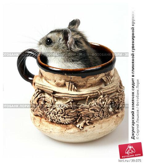 Джунгарский хомячок сидит в глиняной сувенирной кружке, боком, фото № 39075, снято 18 марта 2007 г. (c) Сергей Лешков / Фотобанк Лори