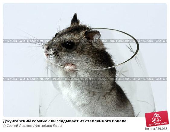 Джунгарский хомячок выглядывает из стеклянного бокала, фото № 39063, снято 18 марта 2007 г. (c) Сергей Лешков / Фотобанк Лори