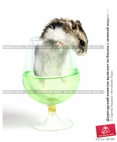 Джунгарский хомячок вылезает из бокала с зеленой жидкостью, фото № 28395, снято 18 марта 2007 г. (c) Сергей Лешков / Фотобанк Лори