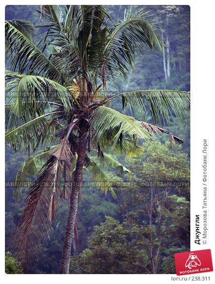 Джунгли, фото № 238311, снято 30 октября 2007 г. (c) Морозова Татьяна / Фотобанк Лори