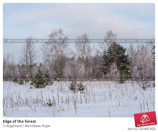 Купить «Edge of the forest», фото № 29403923, снято 25 января 2013 г. (c) Argument / Фотобанк Лори