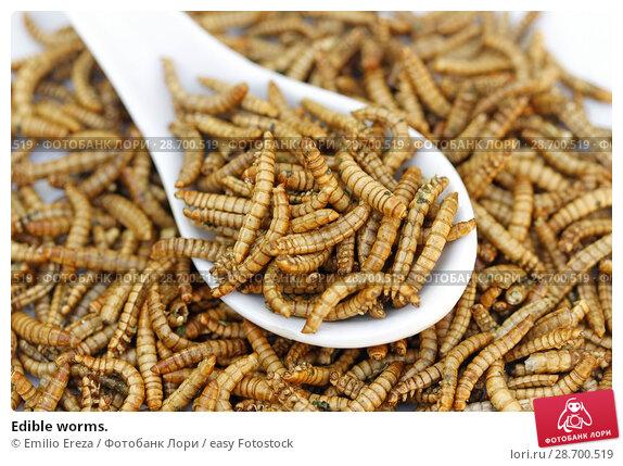 Купить «Edible worms.», фото № 28700519, снято 17 июня 2018 г. (c) easy Fotostock / Фотобанк Лори