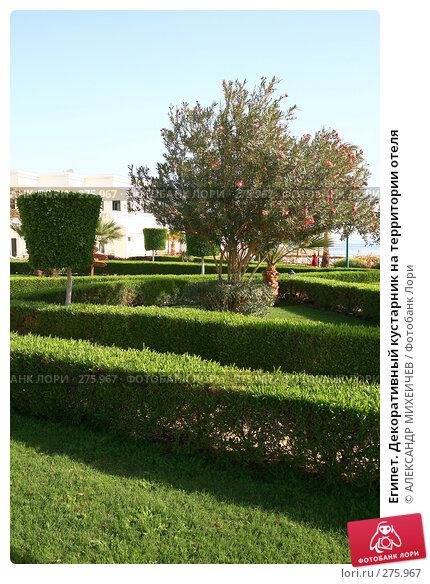 Египет. Декоративный кустарник на территории отеля, фото № 275967, снято 18 февраля 2008 г. (c) АЛЕКСАНДР МИХЕИЧЕВ / Фотобанк Лори