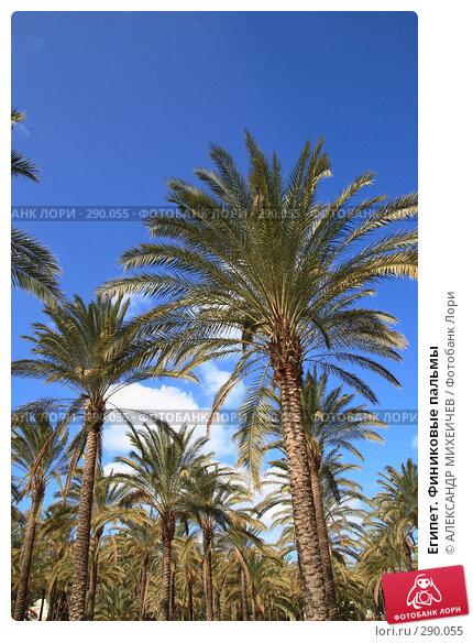 Египет. Финиковые пальмы, фото № 290055, снято 26 февраля 2008 г. (c) АЛЕКСАНДР МИХЕИЧЕВ / Фотобанк Лори
