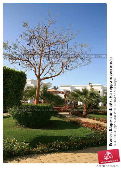 Египет. Шарм-эш-Шейх. На территории отеля, фото № 276075, снято 18 февраля 2008 г. (c) АЛЕКСАНДР МИХЕИЧЕВ / Фотобанк Лори