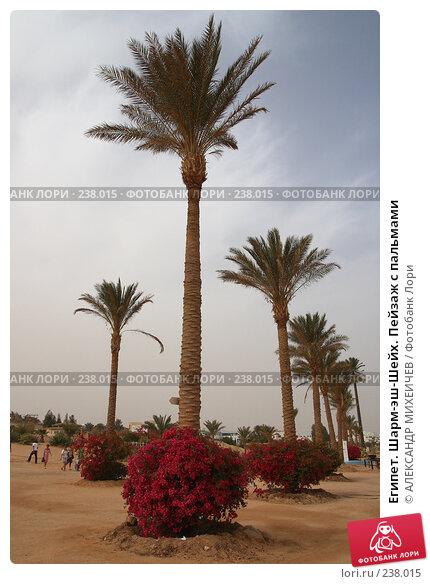 Купить «Египет. Шарм-эш-Шейх. Пейзаж с пальмами», фото № 238015, снято 24 февраля 2008 г. (c) АЛЕКСАНДР МИХЕИЧЕВ / Фотобанк Лори