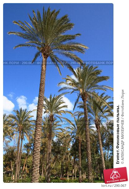 Египет.Финиковые пальмы., фото № 290067, снято 26 февраля 2008 г. (c) АЛЕКСАНДР МИХЕИЧЕВ / Фотобанк Лори