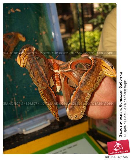 Купить «Экзотическая, большая бабочка», фото № 326507, снято 13 августа 2007 г. (c) Примак Полина / Фотобанк Лори