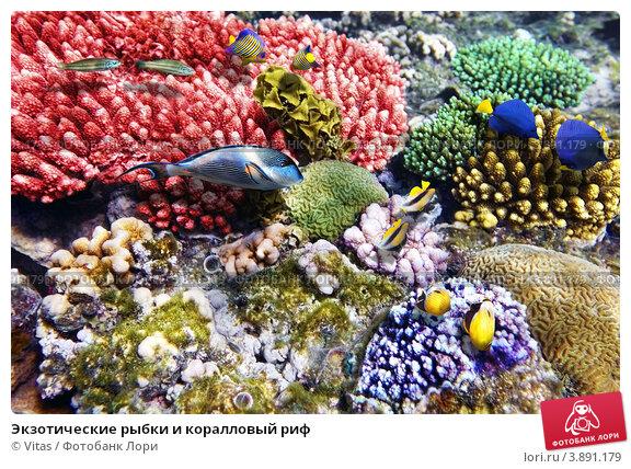 фото рыбки печать