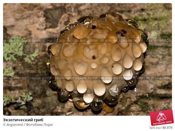 Купить «Экзотический гриб», фото № 48979, снято 14 сентября 2006 г. (c) Argument / Фотобанк Лори