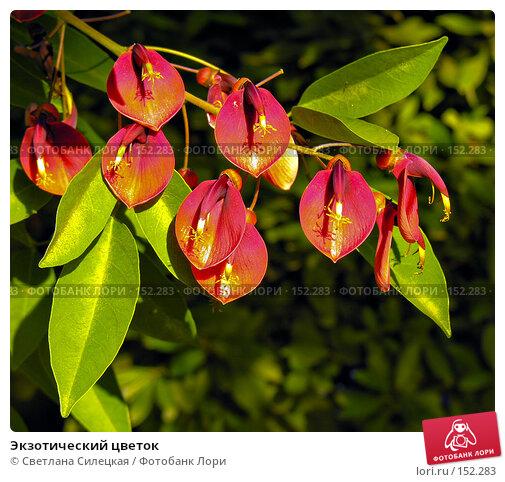 Купить «Экзотический цветок», фото № 152283, снято 8 августа 2007 г. (c) Светлана Силецкая / Фотобанк Лори