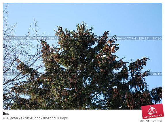 Ель, фото № 126131, снято 18 ноября 2007 г. (c) Анастасия Лукьянова / Фотобанк Лори