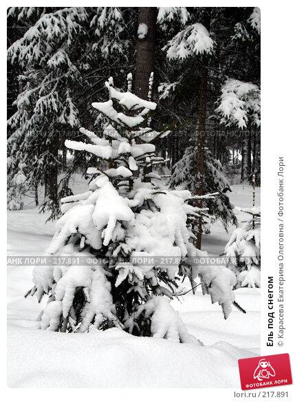 Ель под снегом, фото № 217891, снято 3 февраля 2008 г. (c) Карасева Екатерина Олеговна / Фотобанк Лори