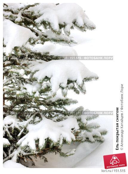 Купить «Ель покрытая снегом», фото № 151515, снято 2 декабря 2007 г. (c) Александр Катайцев / Фотобанк Лори