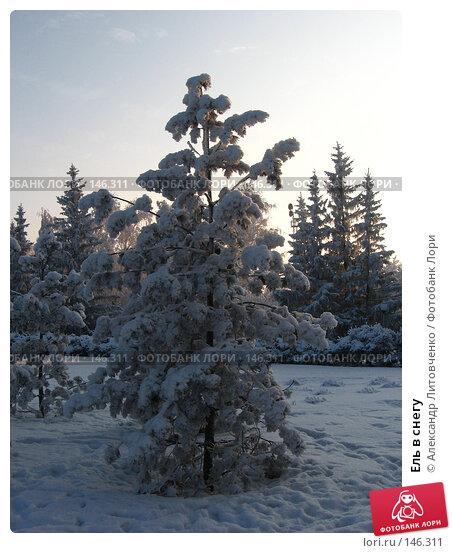 Ель в снегу, фото № 146311, снято 10 декабря 2007 г. (c) Александр Литовченко / Фотобанк Лори