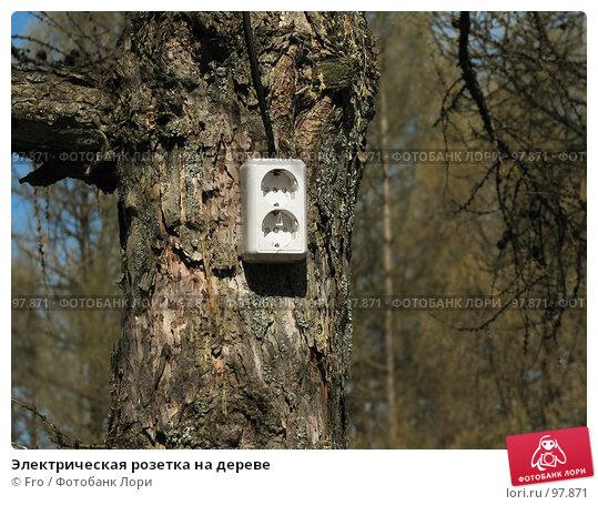 Электрическая розетка на дереве, фото № 97871, снято 1 мая 2007 г. (c) Fro / Фотобанк Лори