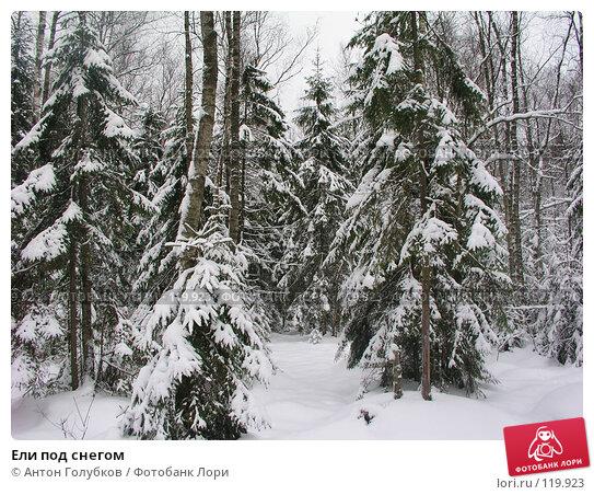 Купить «Ели под снегом», фото № 119923, снято 5 января 2005 г. (c) Антон Голубков / Фотобанк Лори
