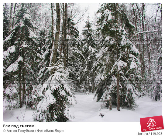 Ели под снегом, фото № 119923, снято 5 января 2005 г. (c) Антон Голубков / Фотобанк Лори