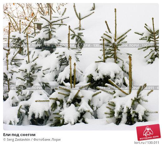Ели под снегом, фото № 130011, снято 23 марта 2005 г. (c) Serg Zastavkin / Фотобанк Лори
