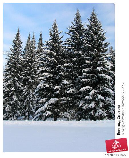 Купить «Ели под Снегом», фото № 130027, снято 17 декабря 2004 г. (c) Serg Zastavkin / Фотобанк Лори