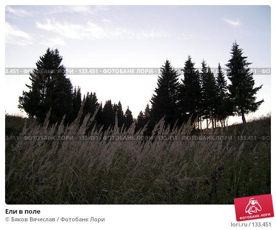 Ели в поле, фото № 133451, снято 21 сентября 2007 г. (c) Бяков Вячеслав / Фотобанк Лори