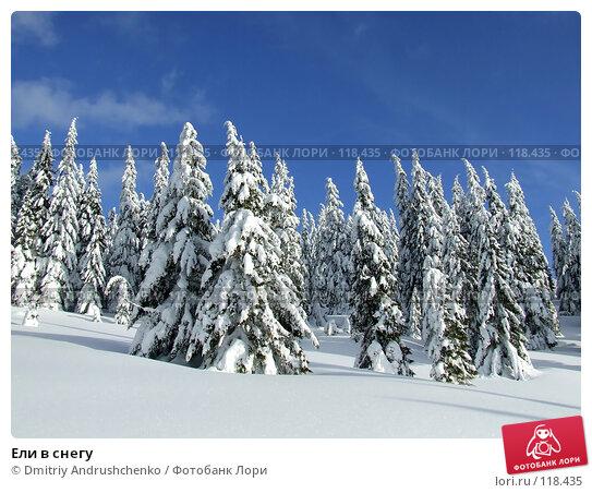 Купить «Ели в снегу», фото № 118435, снято 15 февраля 2007 г. (c) Dmitriy Andrushchenko / Фотобанк Лори