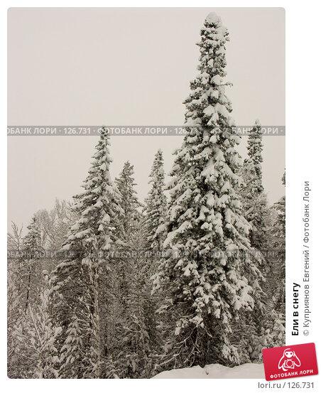 Ели в снегу; фото № 126731, фотограф Куприянов Евгений ...: http://lori.ru/126731