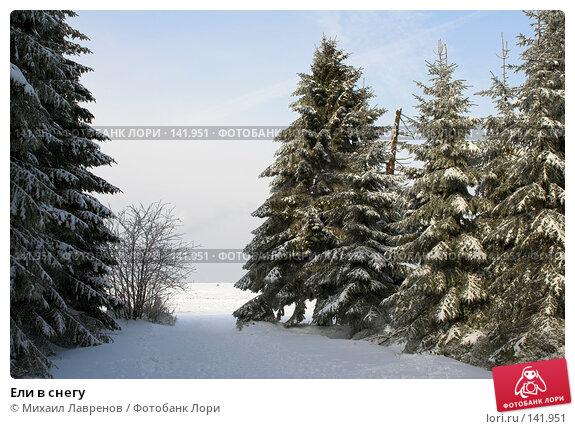 Купить «Ели в снегу», фото № 141951, снято 12 февраля 2006 г. (c) Михаил Лавренов / Фотобанк Лори