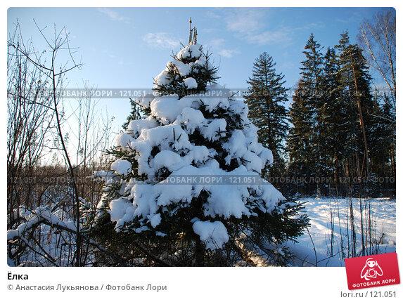 Ёлка, фото № 121051, снято 18 ноября 2007 г. (c) Анастасия Лукьянова / Фотобанк Лори