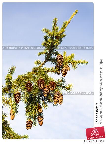 Купить «Еловая ветка», фото № 111879, снято 6 октября 2007 г. (c) Андрей Щекалев (AndreyPS) / Фотобанк Лори