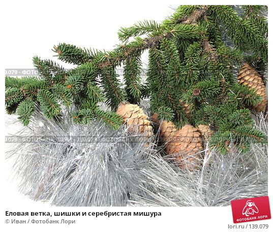 Купить «Еловая ветка, шишки и серебристая мишура», фото № 139079, снято 30 октября 2007 г. (c) Иван / Фотобанк Лори