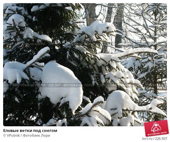 Еловые ветки под снегом, фото № 226507, снято 8 февраля 2007 г. (c) VPutnik / Фотобанк Лори