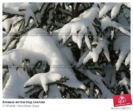 Еловые ветки под снегом, фото № 226511, снято 8 февраля 2007 г. (c) VPutnik / Фотобанк Лори