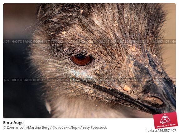 Emu-Auge. Стоковое фото, фотограф Zoonar.com/Martina Berg / easy Fotostock / Фотобанк Лори