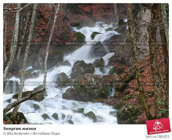 Купить «Энергия жизни», фото № 80011, снято 4 ноября 2006 г. (c) Alla Andersen / Фотобанк Лори