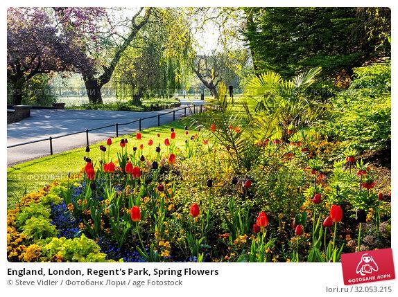 England, London, Regent's Park, Spring Flowers. Стоковое фото, фотограф Steve Vidler / age Fotostock / Фотобанк Лори