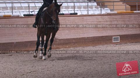 Equestrian - a woman in black clothes rides a dark brown horse on hippodrome. Стоковое видео, видеограф Константин Шишкин / Фотобанк Лори