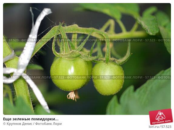 Еще зеленые помидорки..., фото № 57523, снято 30 мая 2007 г. (c) Крупнов Денис / Фотобанк Лори